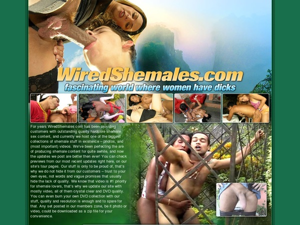 Wired Shemales Promotion